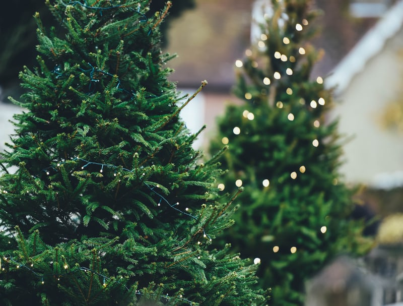 Who Provides The Trees We Use For The Christmas Season?
